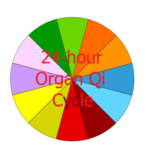 24-hour Organ Qi Cycle